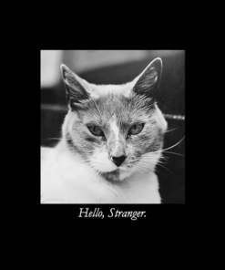 Hello Stranger Cat T Shirt