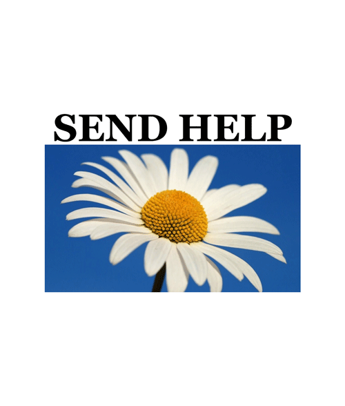 Send Help Daisy Flower T Shirt
